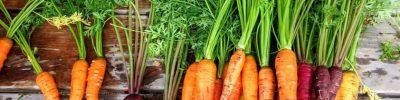 il betacarotene è fondamentale per la nostrqa salute
